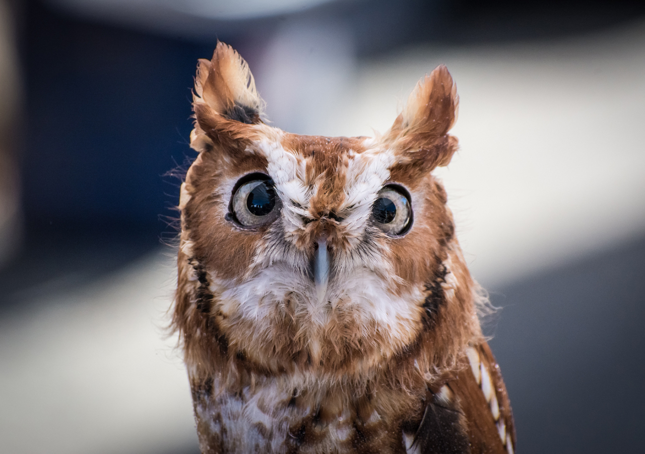Day time looks of owl will make you crazy for sure