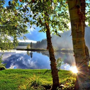 Natural view to see forest in Canada